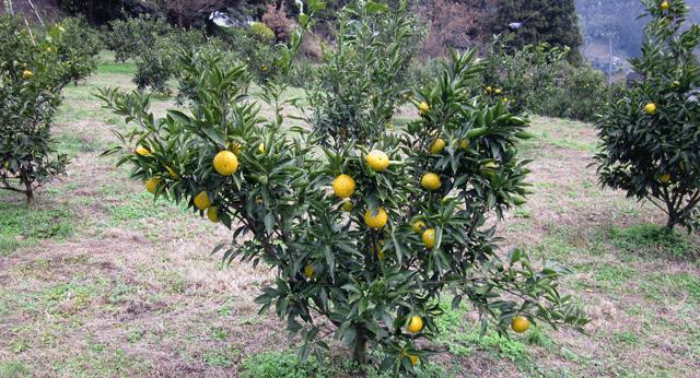 jyabara-kajyuen